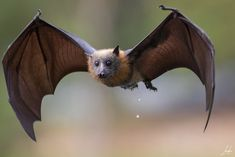 ĐỀ THI IELTS READING VÀ ĐÁP ÁN- Let's Go Bats
