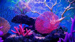 ĐỀ THI IELTS READING VÀ ĐÁP ÁN- The coral reefs of Agatti Island