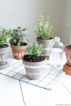 ĐỀ THI IELTS READING VÀ ĐÁP ÁN- Spice plants