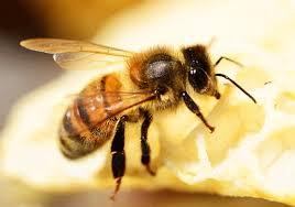 ĐỀ THI IELTS READING VÀ ĐÁP ÁN- Migratory Beekeeping