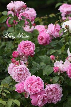 ĐỀ THI IELTS READING VÀ ĐÁP ÁN- Raising the Mary Rose